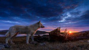 Kingdom of the white wolf - Oddity Noise