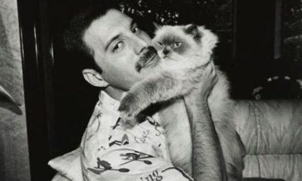 La millonaria herencia de Freddie Mercury