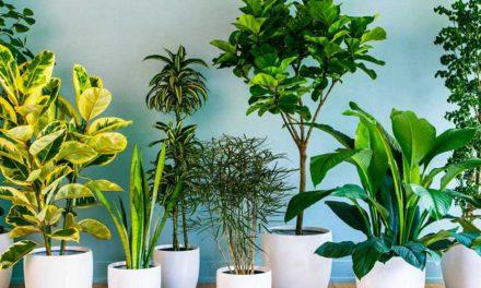¿Te convertiste en el señor o señora de las plantas? Entonces esto te interesa: Visita Plant Fest 2021 en CDMX.